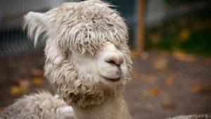 coiffure avant coiffeur